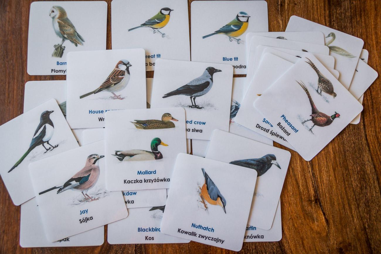 Ptaki po polsku i angielsku. Do posłuchania!