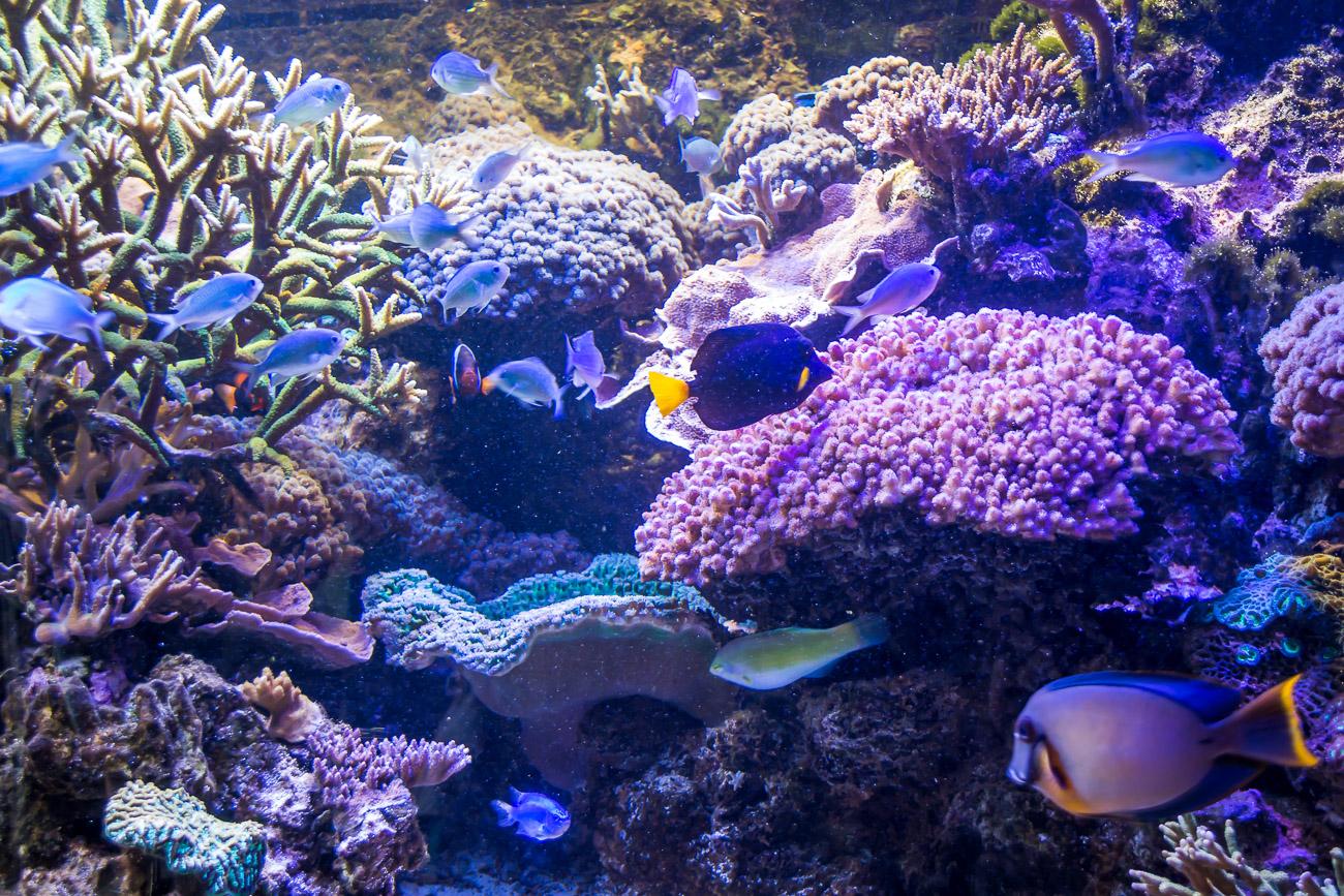 Tu się warto wybrać z dzieckiem dwujęzycznym! Akwarium Gdyńskie.