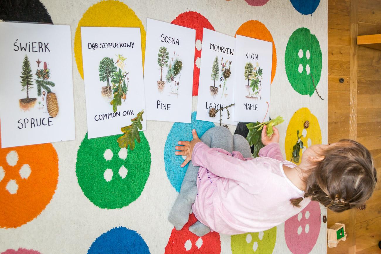 Jak się uczyć o drzewach i lesie po polsku i angielsku?